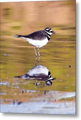 Killdeer Reflection Metal Print