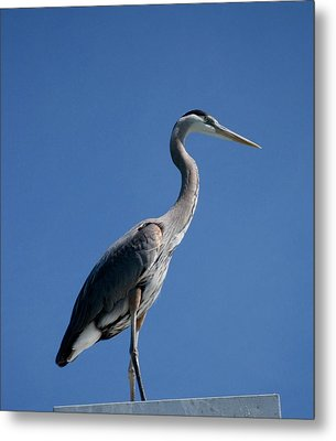 King Blue Metal Print