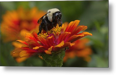 King Of The Flower Metal Print