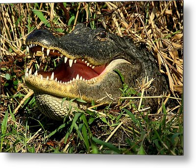 Metal Print featuring the photograph King Of The Swamp by Myrna Bradshaw
