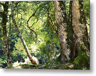 Kingdom Of The Trees. Peradeniya Botanical Garden. Sri Lanka Metal Print by Jenny Rainbow
