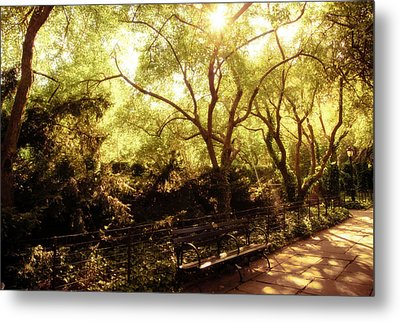 Kissed By The Sun - Central Park - New York City Metal Print by Vivienne Gucwa