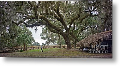 Metal Print featuring the photograph Kissimmee Cow Camp 4 by Larry Nieland
