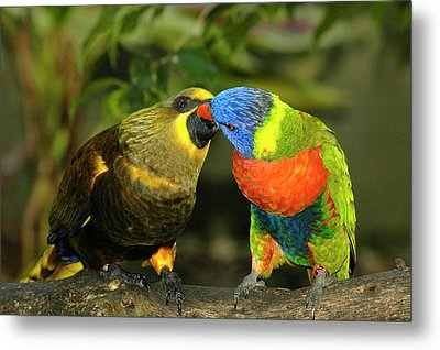 Kissing Birds Metal Print by Carolyn Marshall