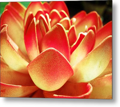 Kitsch Lotus Metal Print by Sumit Mehndiratta