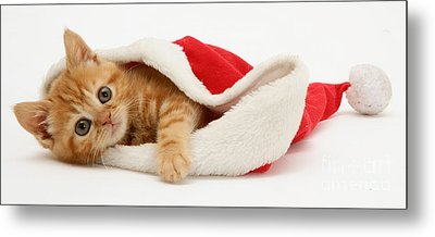 Kitten In A Santa Hat Metal Print