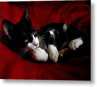 Kitten On Red Take Two Metal Print by Maggy Marsh