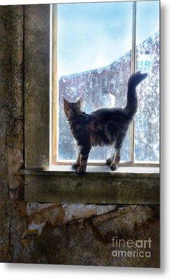 Kitten On Windowsill Of Abandoned House Metal Print