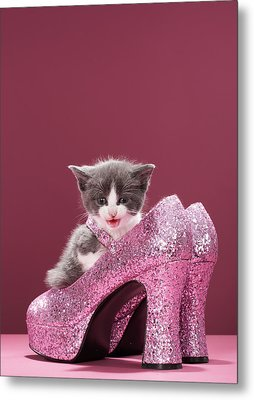 Kitten Sitting In Glitter Shoes Metal Print by Martin Poole
