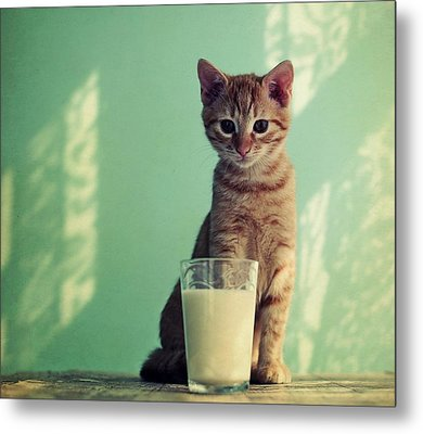Kitten With Glass Of Milk Metal Print by By Julie Mcinnes