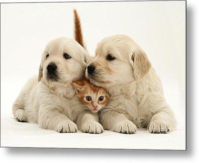Kitten With Puppies Metal Print