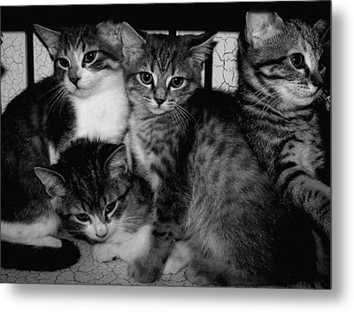 Kittens Corner Metal Print by Christy Leigh