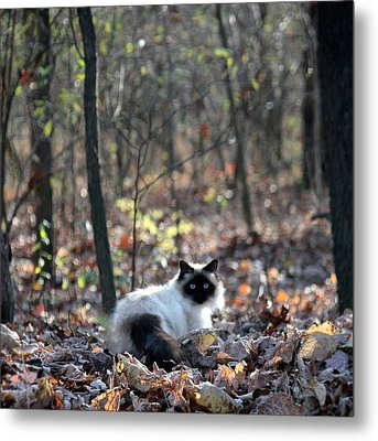 Kitty And Bokeh Metal Print by Penny Hunt
