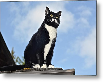 Metal Print featuring the photograph Minnie Kitty Of Destiny by Ronda Broatch