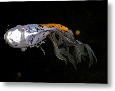 Koi And Coins Metal Print by Kirsten Giving