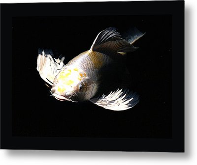 Koi Coming To The Light Metal Print by Don Mann