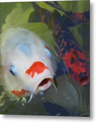 Koi Fish #1 Metal Print by Todd Sherlock