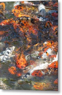 Koi Fish #2 Metal Print by Todd Sherlock