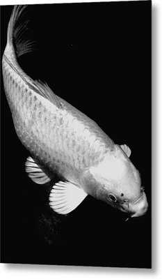 Koi In Monochrome Metal Print by Don Mann