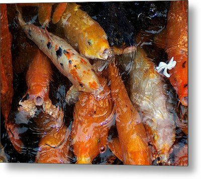 Metal Print featuring the photograph Koi In Pond by Peter Mooyman