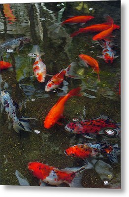 Metal Print featuring the photograph Koi Klatch by Sandy Fisher