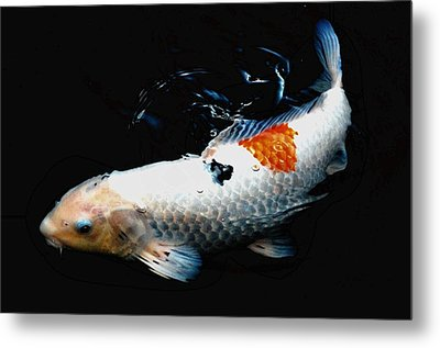 Koi Rising Metal Print by Don Mann