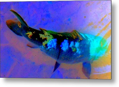 Koi Story One A Metal Print by Randall Weidner