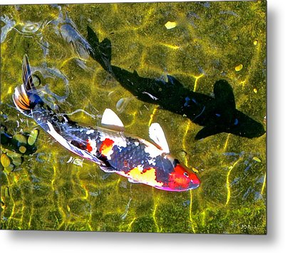 Koi With Shadow Metal Print by Brian D Meredith