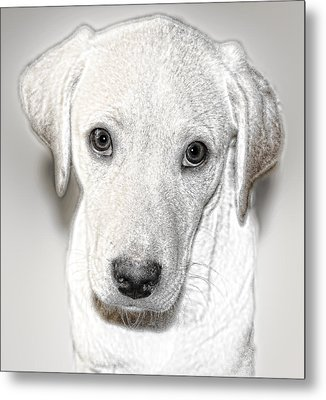 Lab Puppy Bw Sketch Metal Print