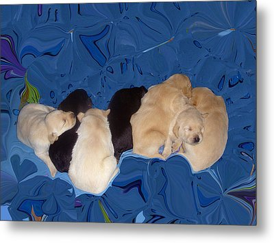 Lab Pups 1 Metal Print by Aimee L Maher Photography and Art Visit ALMGallerydotcom