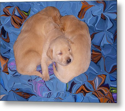 Lab Pups 2 Metal Print by Aimee L Maher Photography and Art Visit ALMGallerydotcom