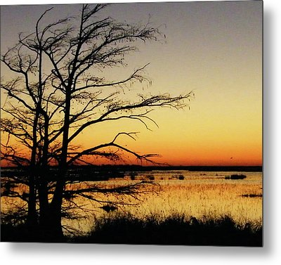 Metal Print featuring the photograph Lacassine Sunset by Lizi Beard-Ward