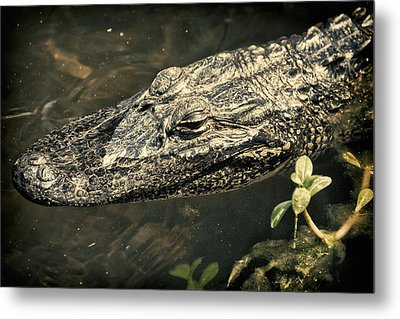 Lady Alice Queen Of The Lake Metal Print by Joan Carroll