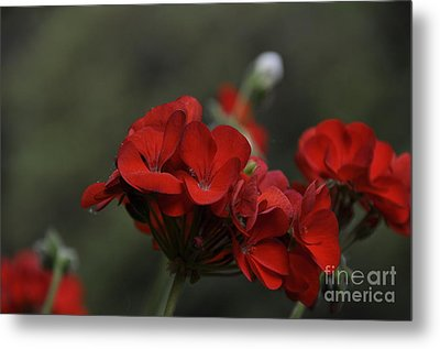 Metal Print featuring the photograph Lady In Red by Tamera James