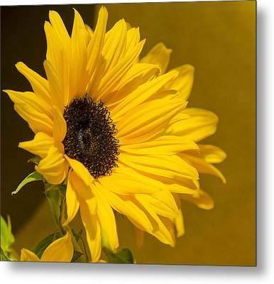 Lady Sunflower Metal Print by MaryJane Armstrong