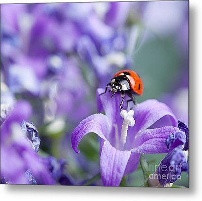 Ladybug And Bellflowers Metal Print