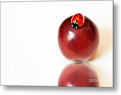 Ladybug On Grape Metal Print by Artist and Photographer Laura Wrede