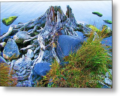 Metal Print featuring the photograph Lake Shore Weathered Stump by Michele Penner