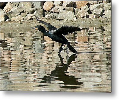 Metal Print featuring the photograph Landing Cormorant by Stephen  Johnson