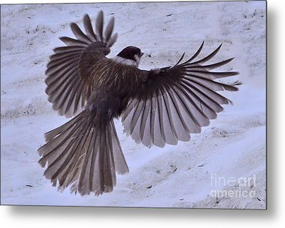 Metal Print featuring the photograph Landing by Jack Moskovita