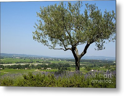Landscape Of Provence. France Metal Print by Bernard Jaubert