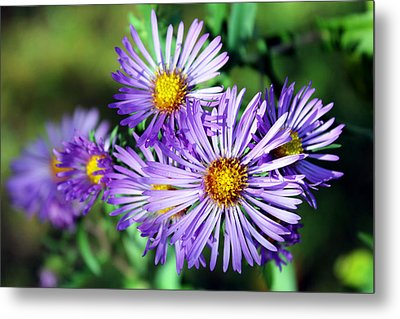 Last Bloom Metal Print by Sheryl Burns