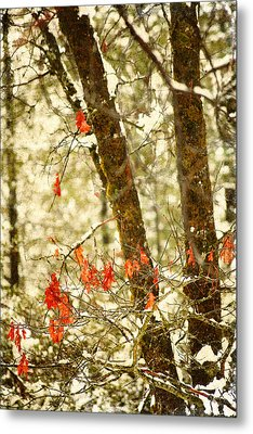 Last Leaves Clinging Metal Print by Bonnie Bruno