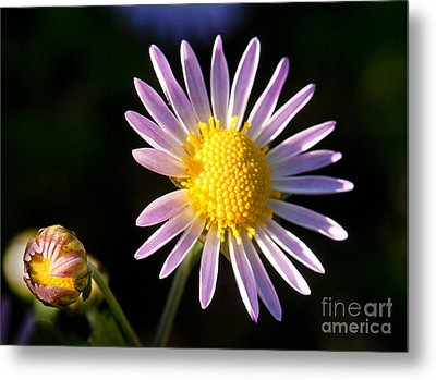 Metal Print featuring the photograph Last Ray Of Sun by Jim Moore