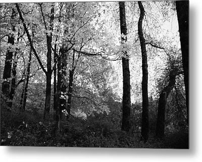 Metal Print featuring the photograph Lasting Leaves by Kathleen Grace
