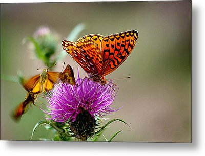 Late For Lunch Metal Print by Vicki Pelham
