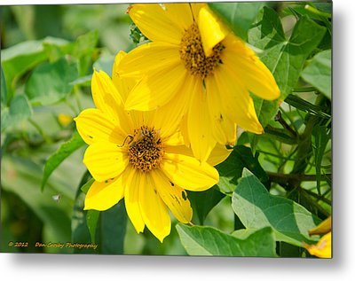 Late Summer Blooms Metal Print by Dan Crosby