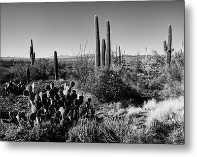 Late Winter Desert Metal Print by Chad Dutson