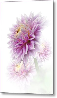 Lavender Dahlia Metal Print