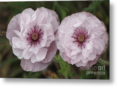 Metal Print featuring the photograph Lavender Poppies by Michele Penner